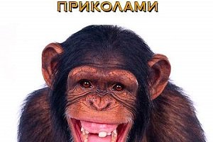 Прикольный тост про год обезьяны