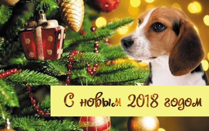 Красивые и прикольные открытки на Новый год собаки 2018: фото
