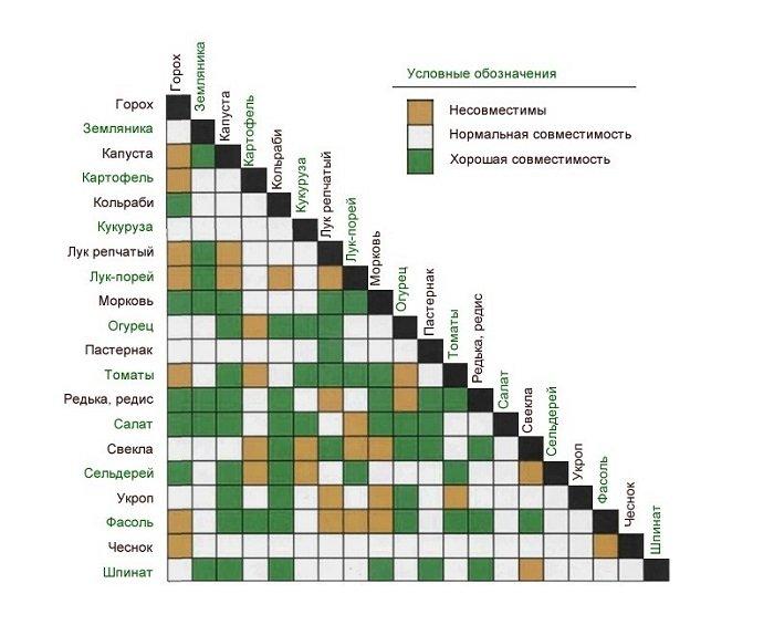 Совместимость овощей в таблице
