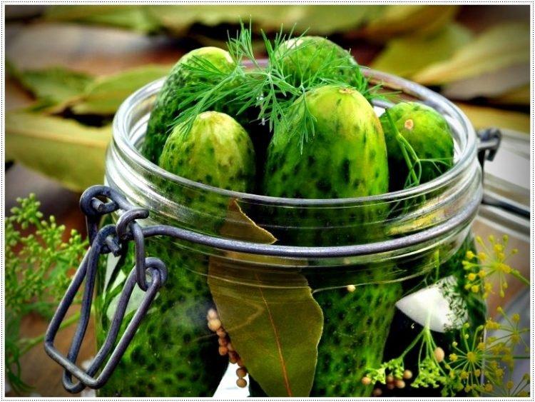 Рецепты приготовления малосольных огурцов быстрого приготовления