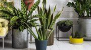 Тенелюбивые комнатные растения. Названия и описание