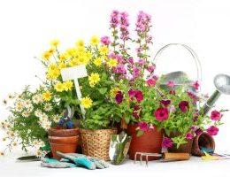 Миниатюра к статье Лунный посевной календарь на 2017 год для садовода и огородника