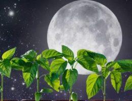 Календарь посадок на 2017 год для садоводов и огородников